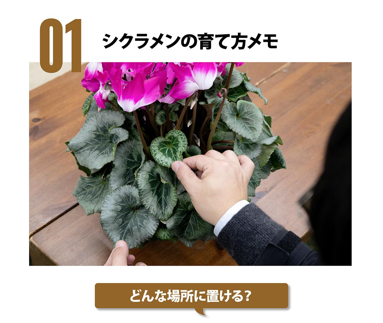 花 たら シクラメン が 終わっ
